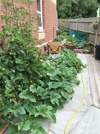 garden6_1Aug16
