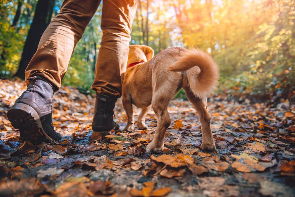 Paseo de perros en el bosque
