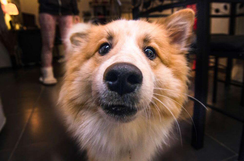 Cerca de bigotes de perro