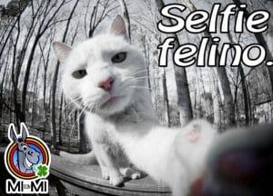 gatto-selfie