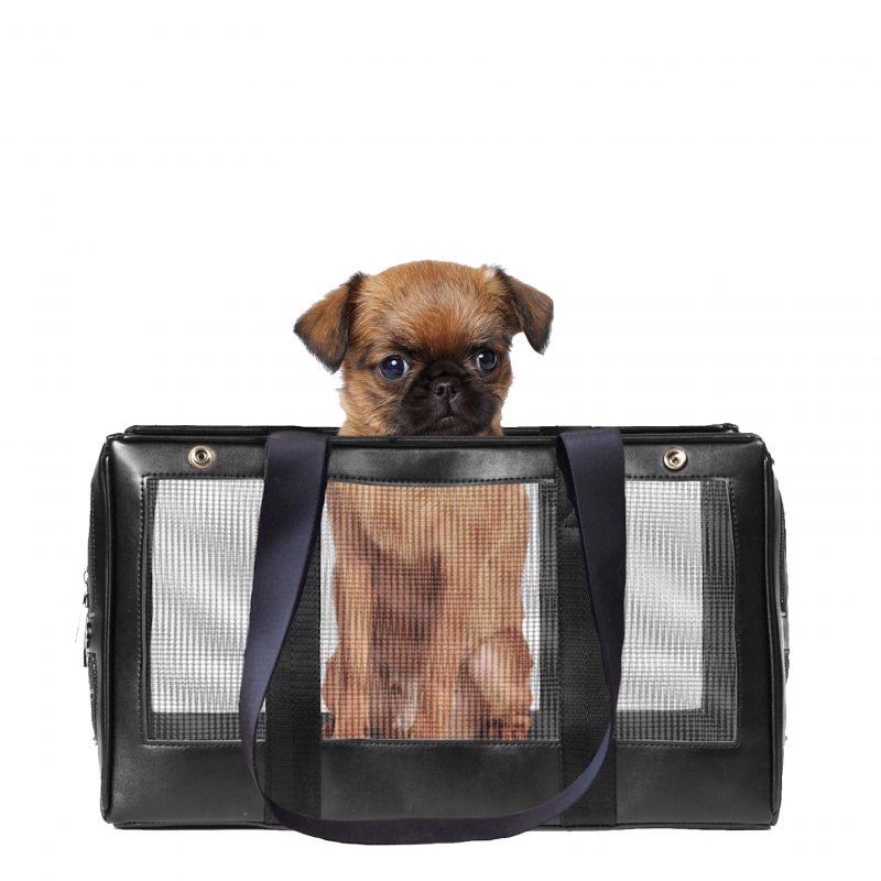 Mesh Base Pet Carrier