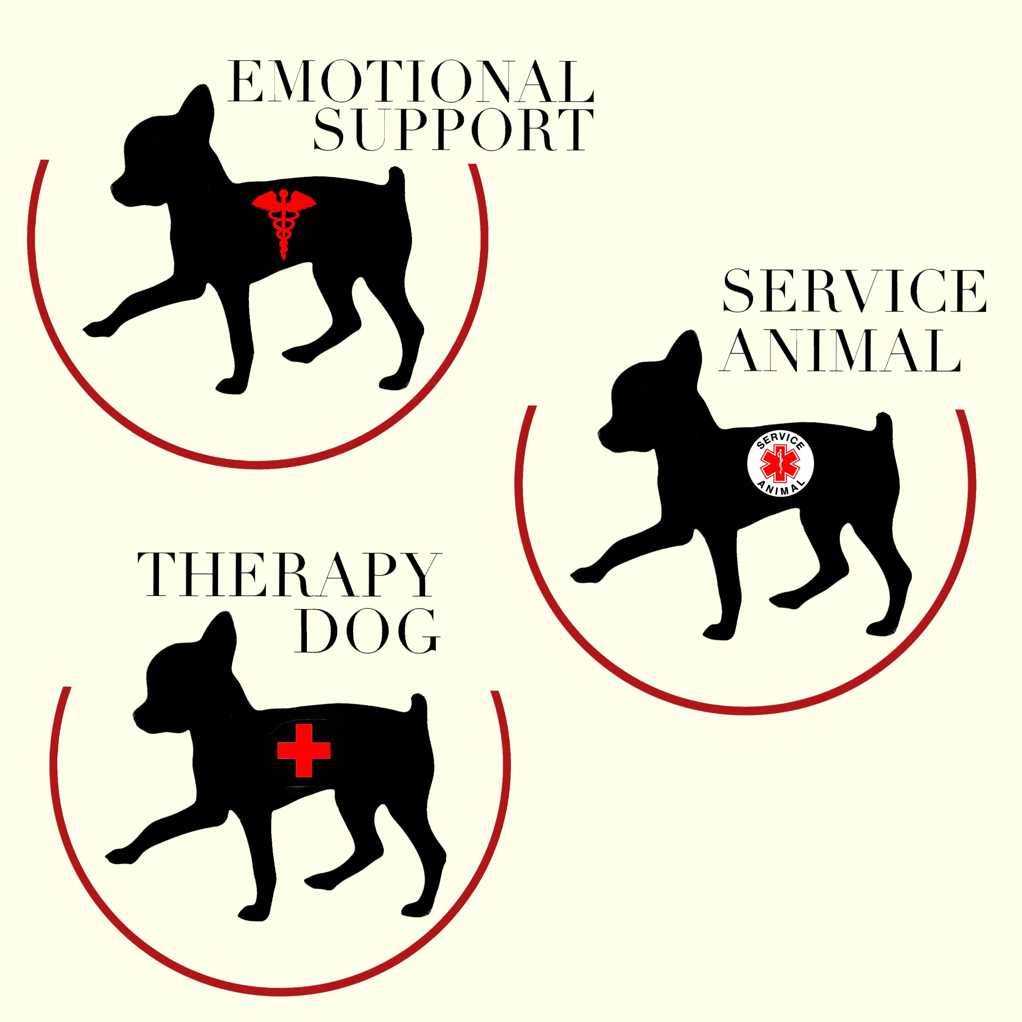 Image of: Therapy Dog Service Dogs Emotional Support Animals Therapy Dogswhats The Difference Miso Pup Quora Service Dogs Emotional Support Animals Therapy Dogswhats The