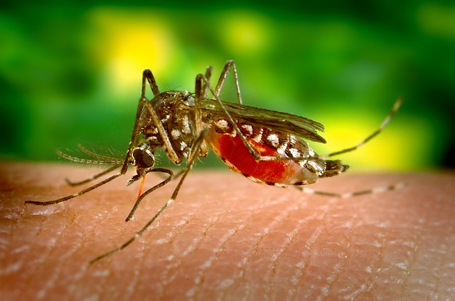 picadura mosquito