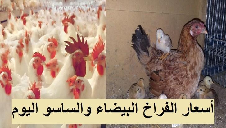 أسعار الدواجن الثلاثاء.. سعر الفراخ اليوم 4 مايو وسعر الكتكوت الابيض وأسعار بورصة الدواجن 9