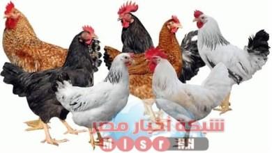Photo of شبكه أخبار مصر ترصد لكم أسعار الدواجن اليوم الاربعاء ٢٢يوليو 2020