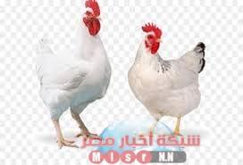 Photo of شبكه أخبار مصر ترصد لكم أسعار الدواجن اليوم الثلاثاء ١١ اغسطس 2020