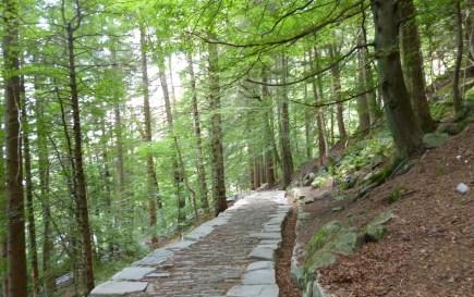 Viele stolze Stufen ... in Norwegen