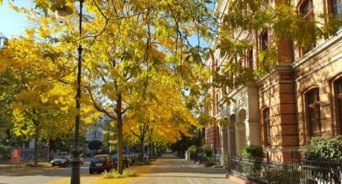 Hegelstraße in Magdeburg im Herbst