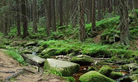 So grün! So gute Luft! Im Harz.