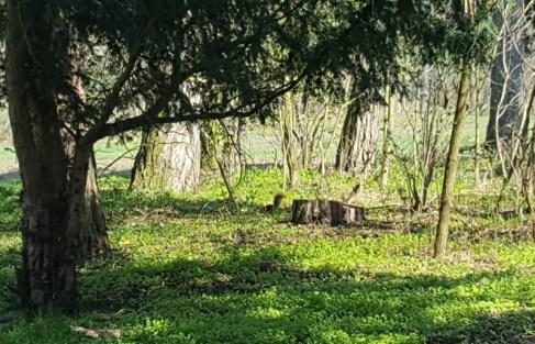 Suchbild: finde das Eichhörnchen
