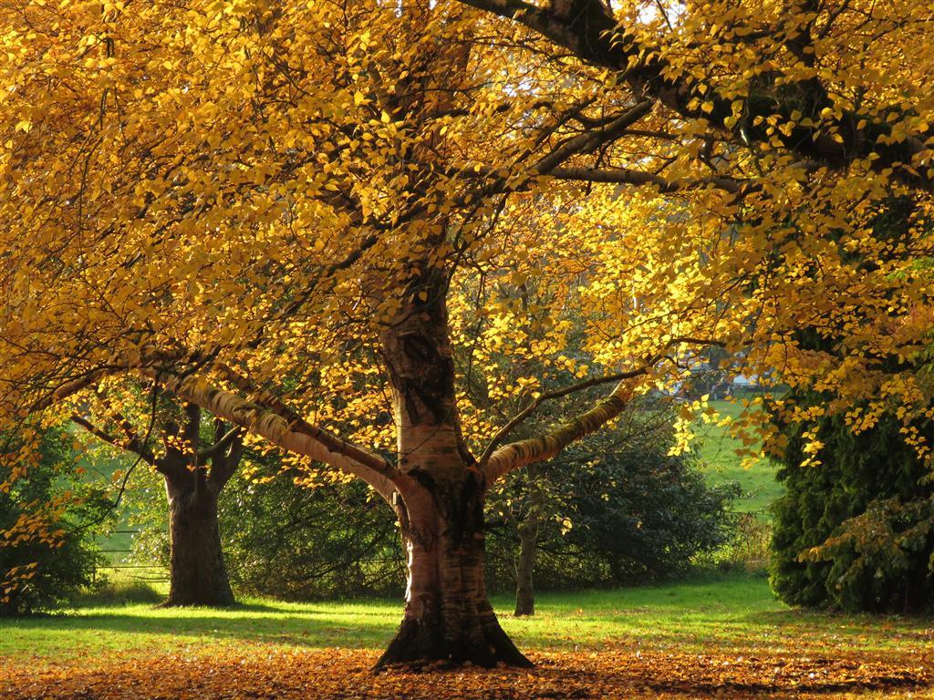 Autumn Colours at Westonbirt Arboretum