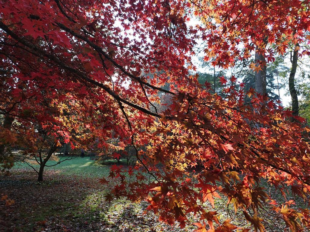 Visiting Westonbirt Arboretum, Gloucestershire