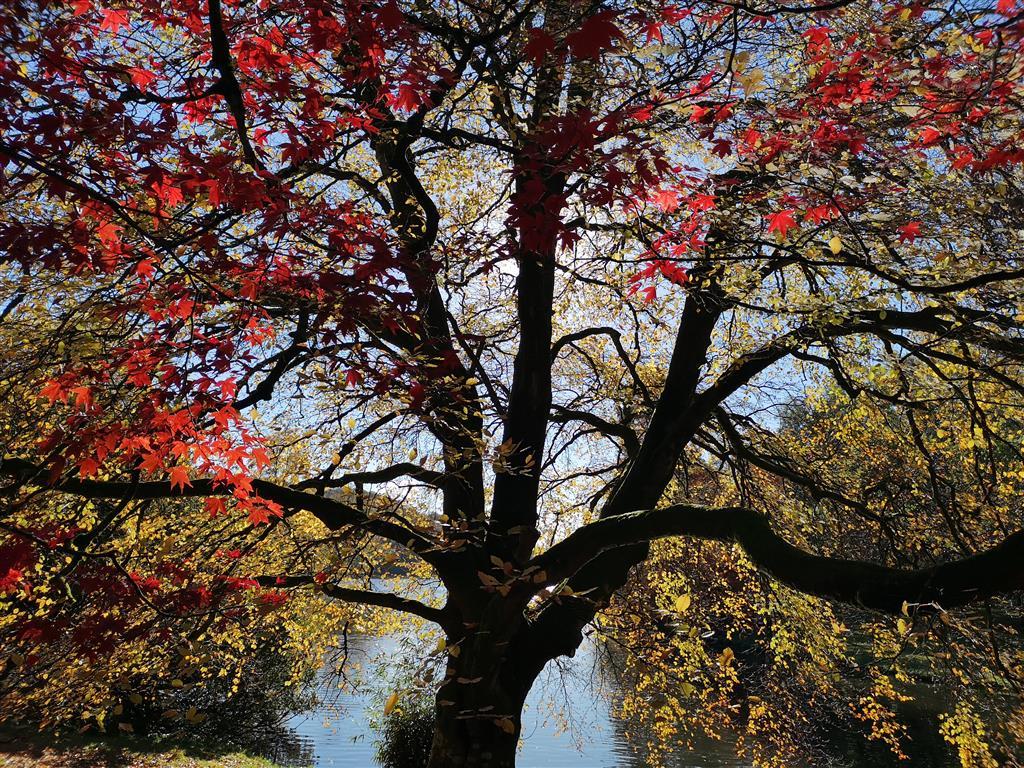 Visiting National Trust Stourhead during autumn