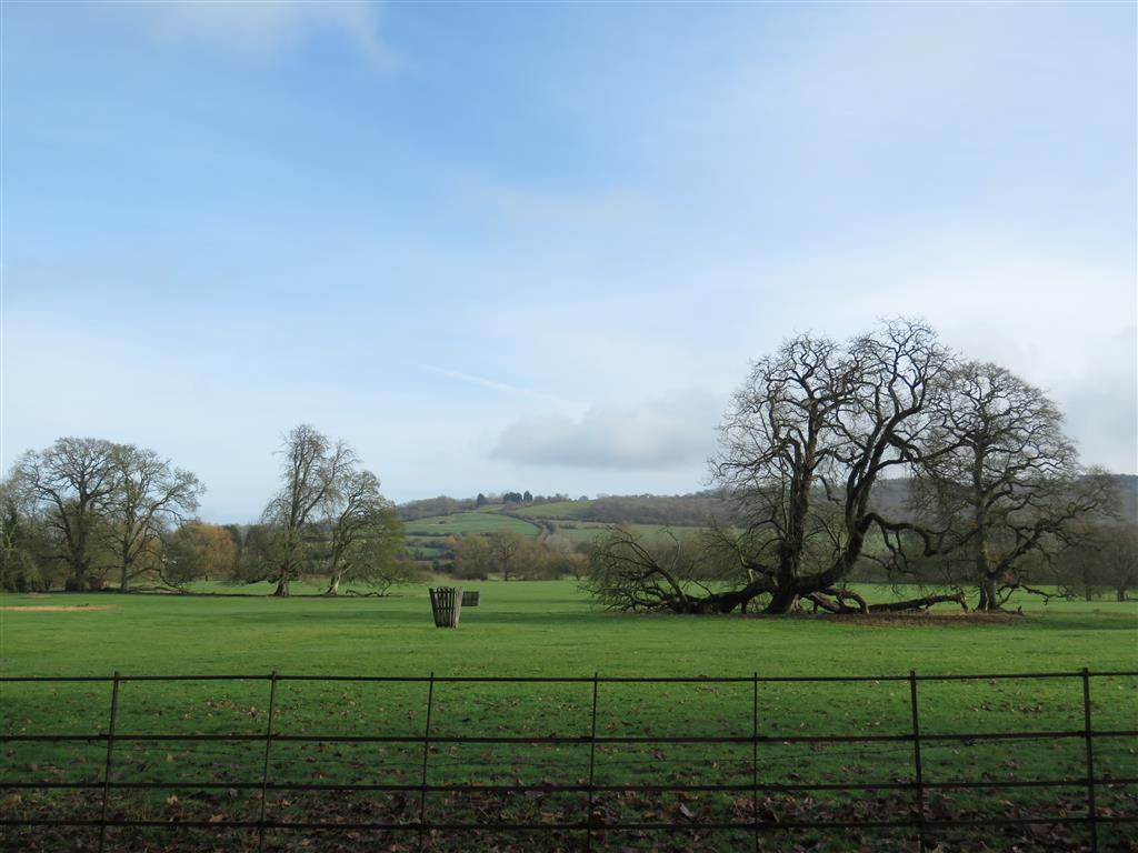 Views of Lacock's Grounds