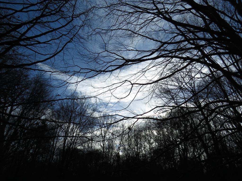 Winter sky, Welford Park, Berkshire