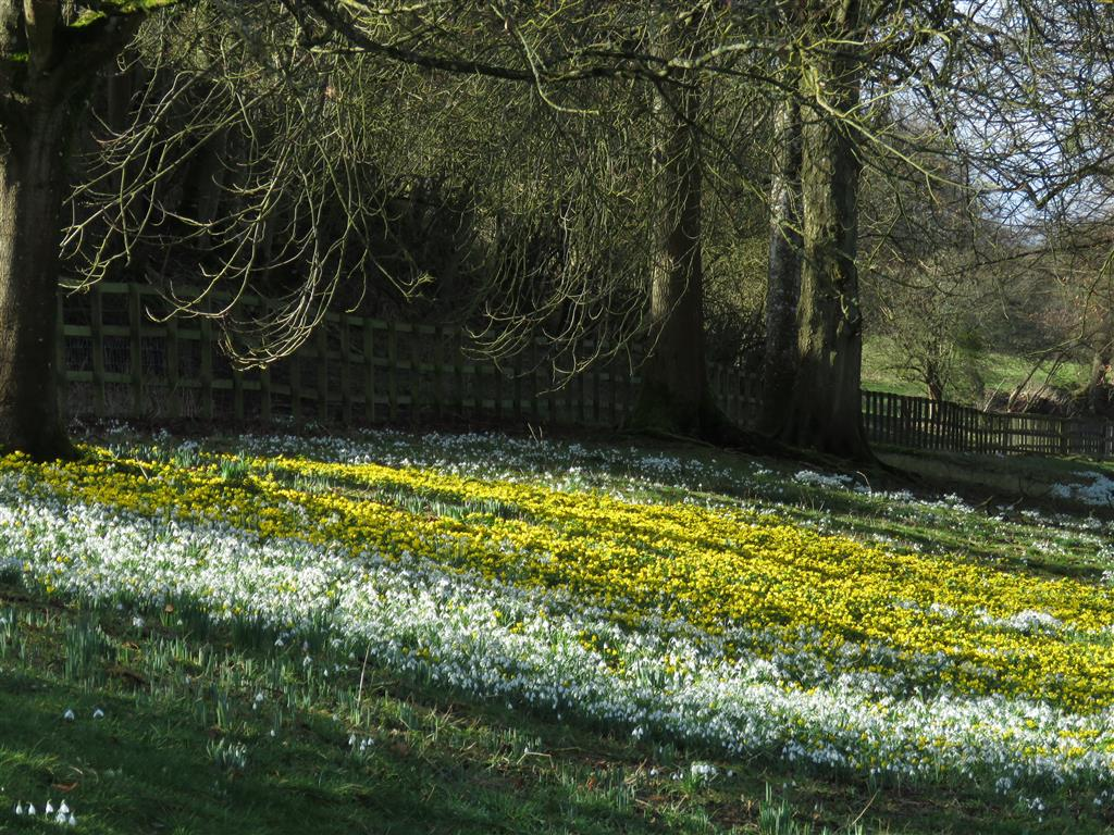 Snowdrops and aconites at Welford Park