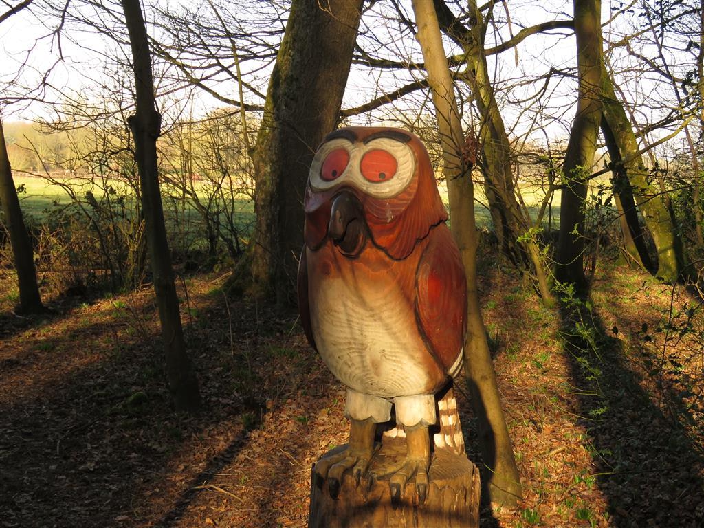 Owl, Zog Trail, Westonbirt Arboretum, Gloucestershire