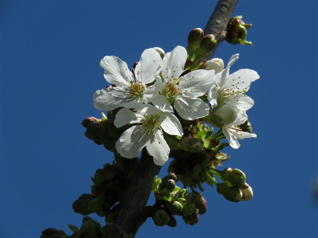 Spring in Chippenham, Wiltshire