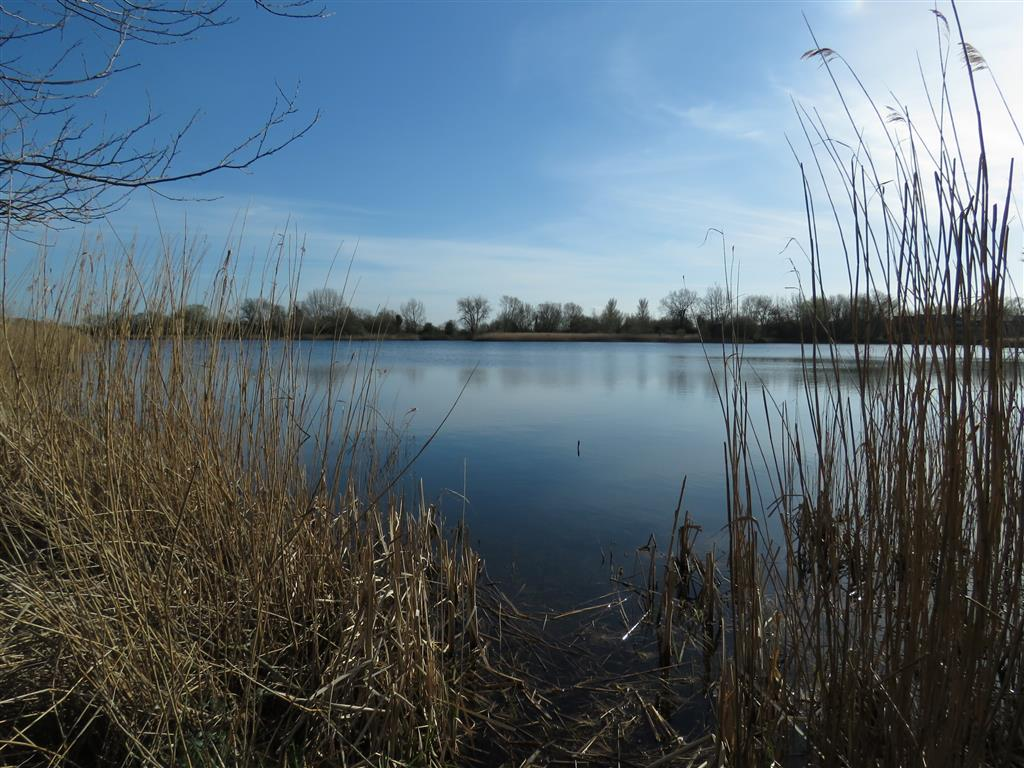 Visiting Cotswold Water Park: A Walk in South Cerney, Gloucestershire