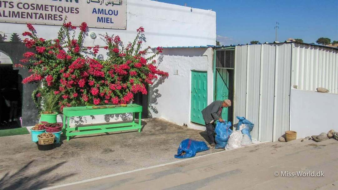 Afous Argan Oil Factory Morocco