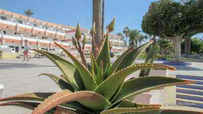Aloe Vera Agadir Morocco