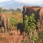 Udawalawe National Park, Sri Lanka