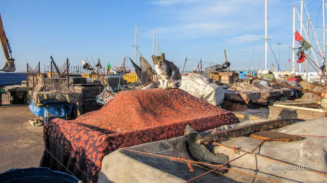 There are so many cats in the Fishing Port of Essaouira