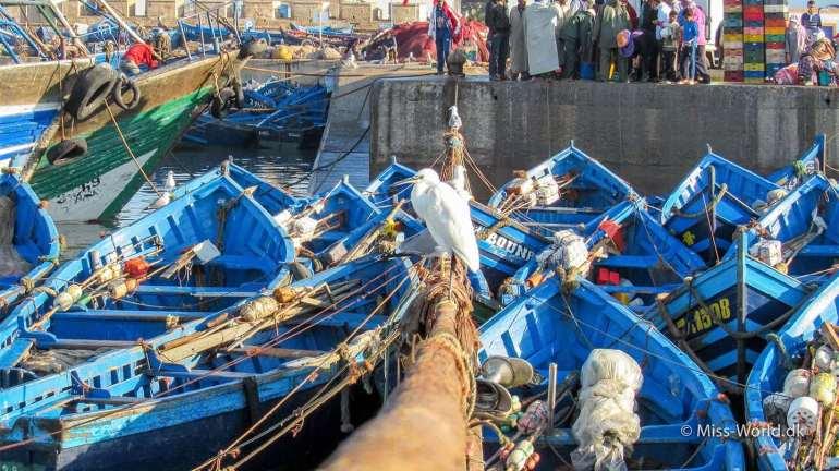 Essaouira Port - White heron in the harbour of Essaouira