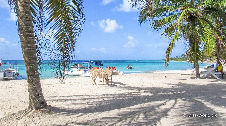 Isla Saona🦋 3 dage off-grid i Den Dominikanske Republik