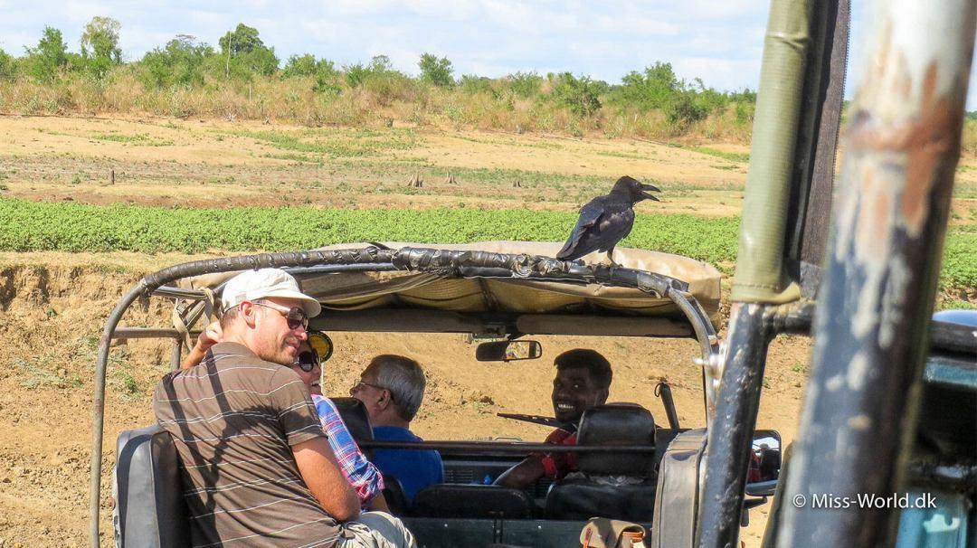 Jeepsafari i Udawalawe National Park