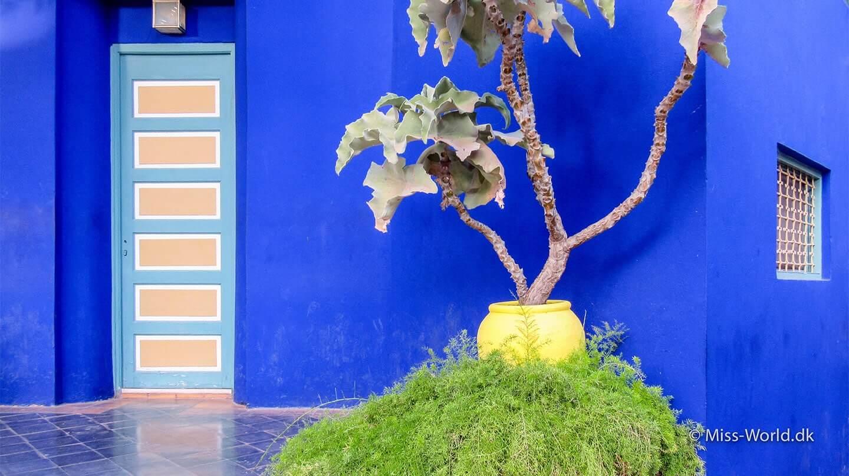 Majorelle Garden i Marrakesh, Marokko 🌵 (Billeder)