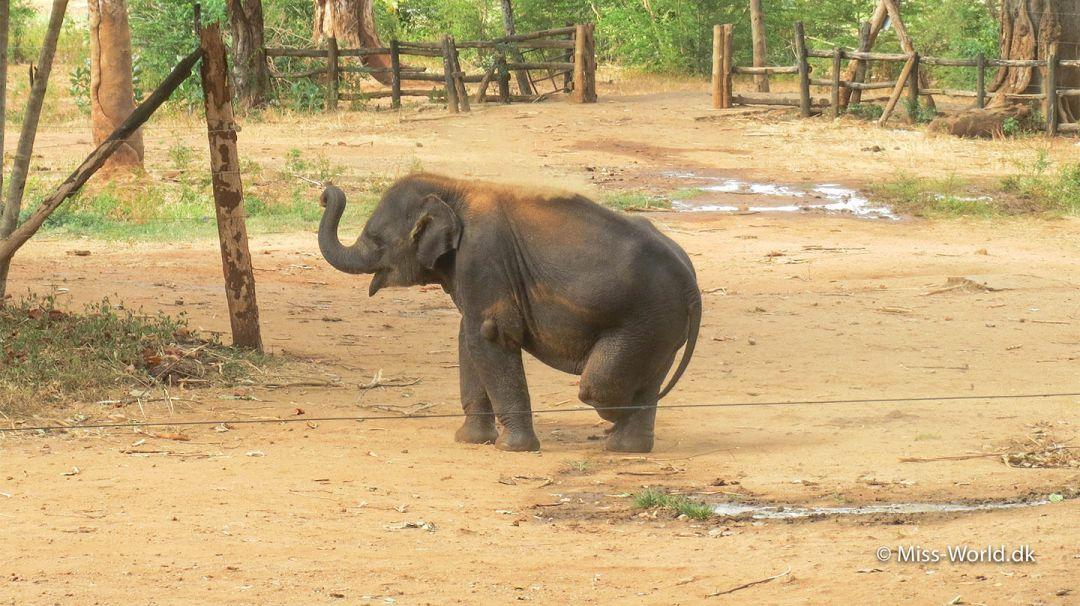 Namal baby elephant at the Elephant Transit Home in Udawalawe Sri Lanka