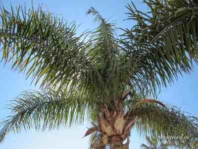Palme Agadir Marokko
