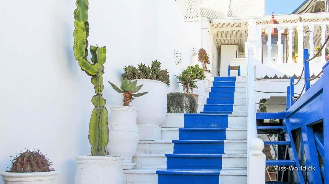 Restaurant Essaouira Morocco - Cactus Plants and stairs