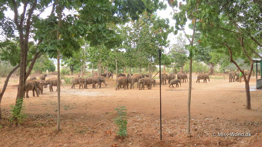 The Elephant Transit Home in Udawalawe Sri Lanka