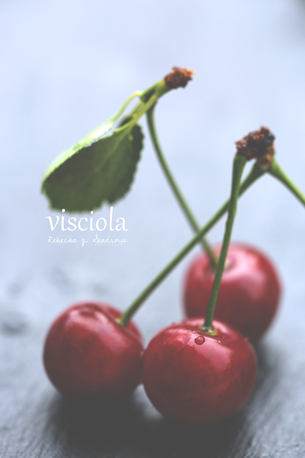 visciola sour cherries