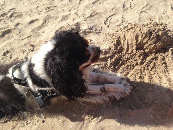 Wurfspiele am Hundestrand