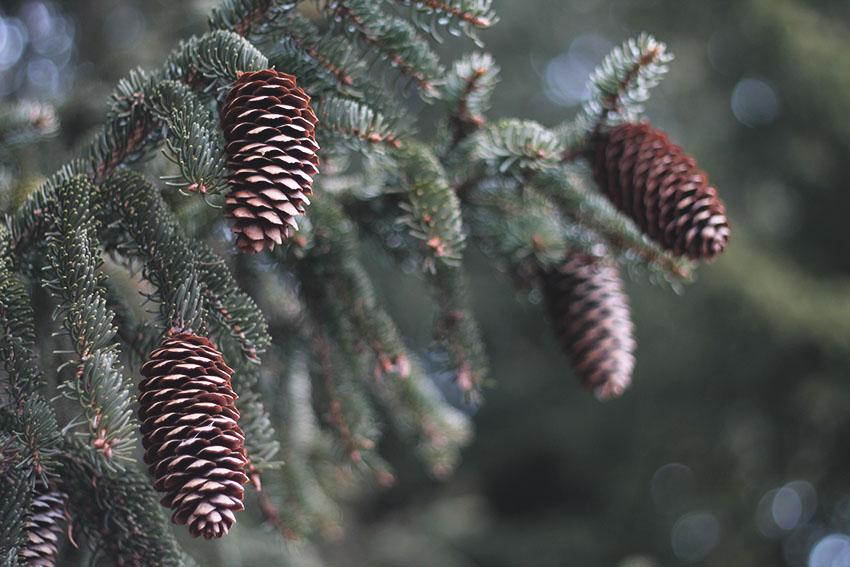 Sourires d'hiver, petits bonheurs de janvier - Slow life - Miss Blemish