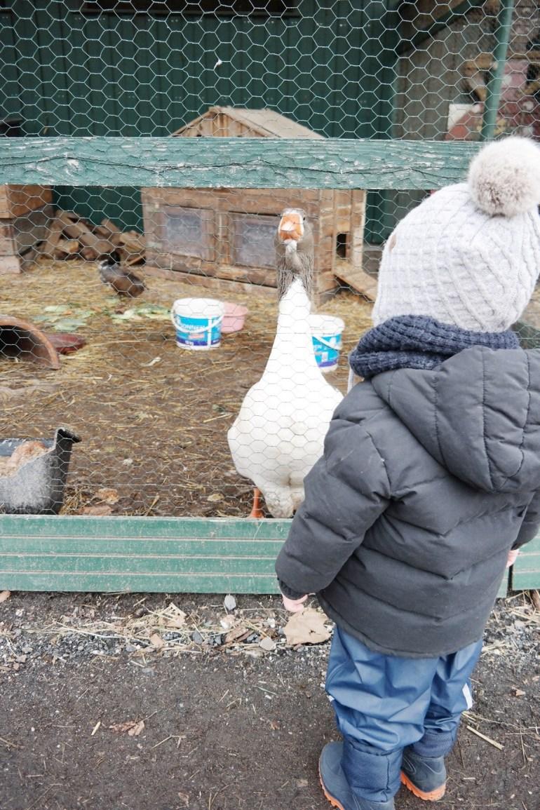 missbonnebonne mamablog familienblog ausflugsziel ausflugstipp mit kindern rheinland bonn köln krewelshof (3)