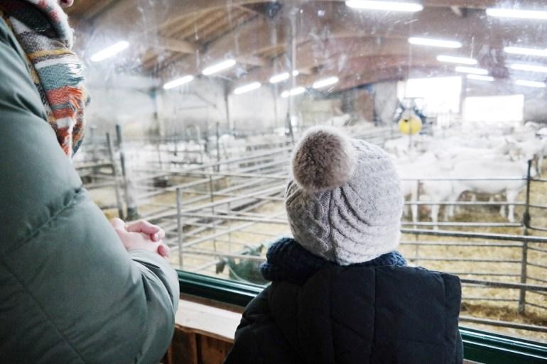 missbonnebonne mamablog familienblog ausflugsziel ausflugstipp mit kindern rheinland bonn köln krewelshof (4)
