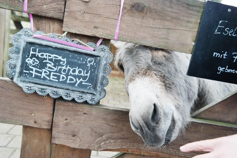 missbonnebonne mamablog familienblog ausflugsziel ausflugstipp mit kindern rheinland bonn köln krewelshof lohmar (2)