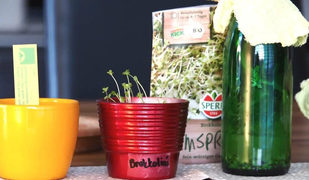 Samen und Gemüse - Buch Kinder Naturwerkstatt gärtnern mit Kindern sprossen samen