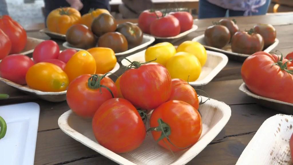 Führung, tomaten, tomatendegustation, lernen, montessori, kinder, familie, mamablog, gemüsebau, gewächshaus, horssol, treibhaus