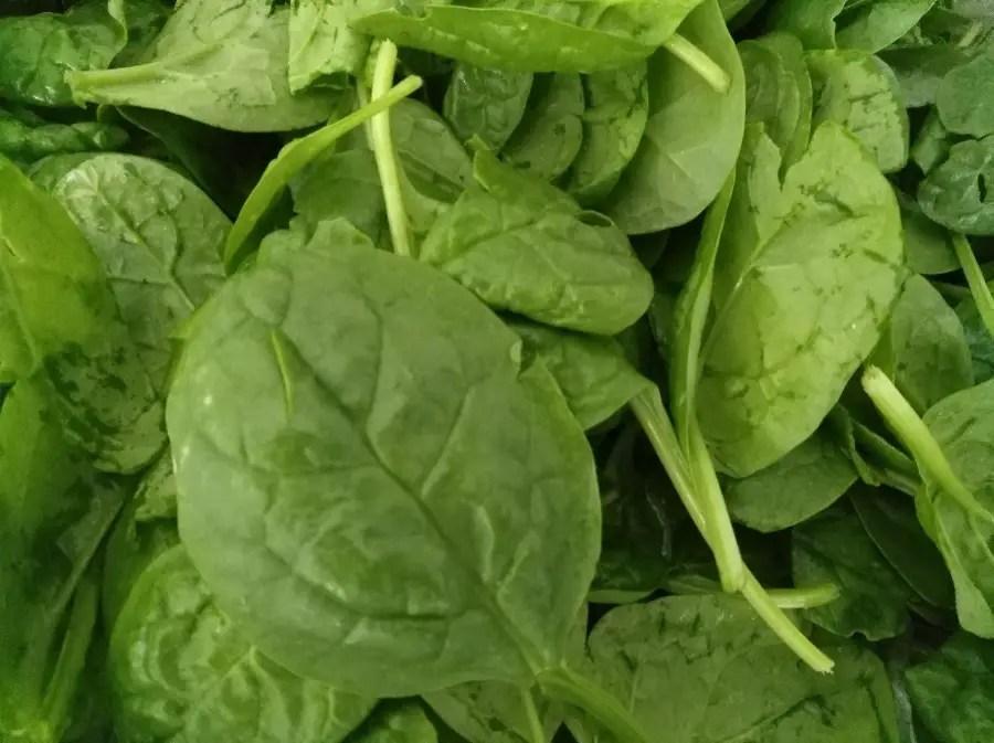 Spinat Blattspinat frisch geerntet foodblog spinatknödel rezept
