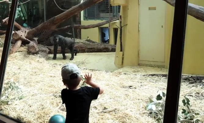 Zoo Zürich, Gorilla, Affen, Züri Zoo, Ausflugstipp, Tagesausflug, familie, kinder, mamablog, schweiz, ferien, mobiliar, rabatt, kooperation