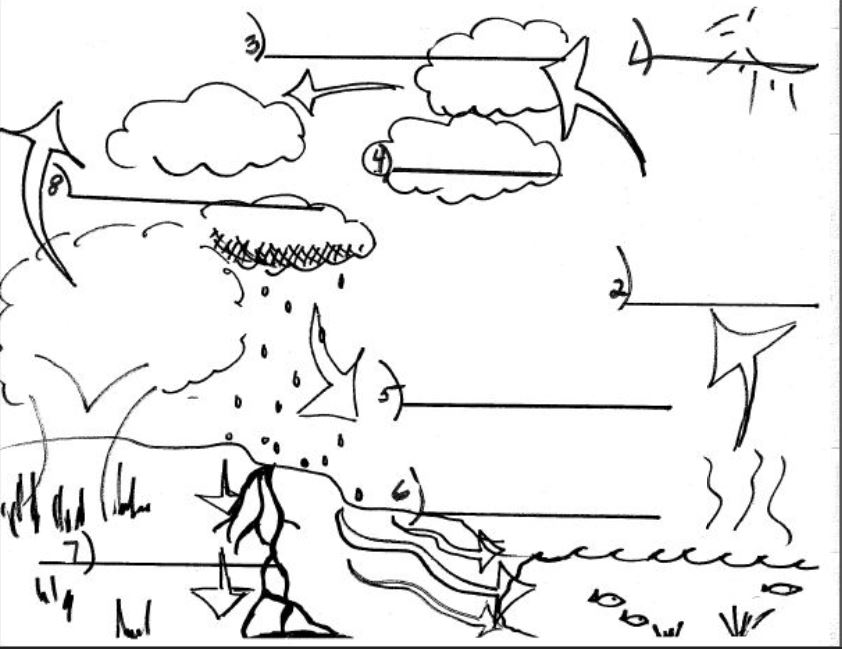missbzscience / Water Cycle and Clouds