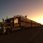 Life on an Outback Cattle Station: Roadtrains, Cattle & Tea Cake