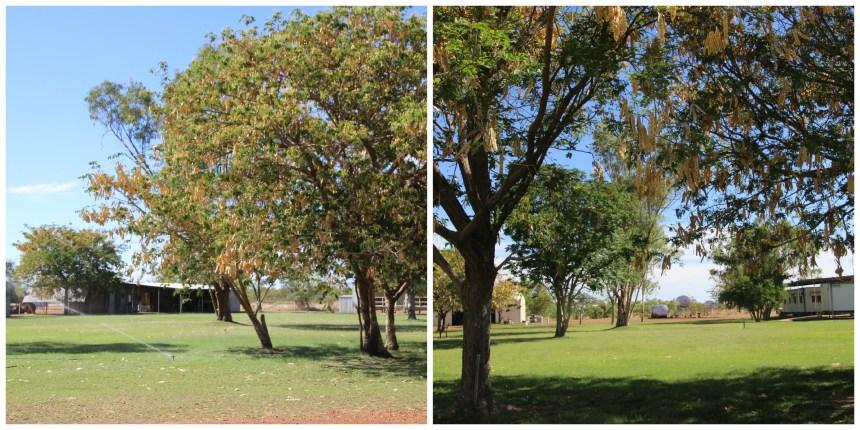 Outback Garden