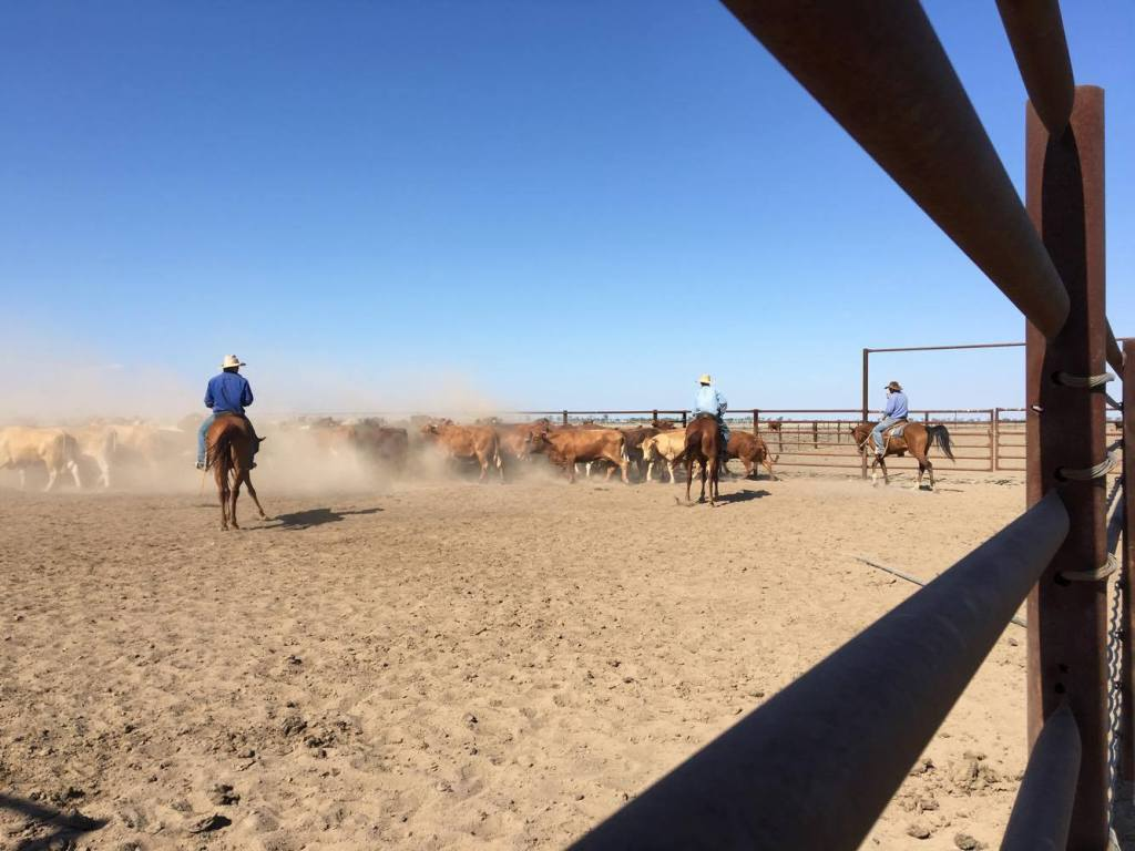 Life on an Outback Cattle Station – A Unique Lifestyle