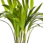 Plante verte 002